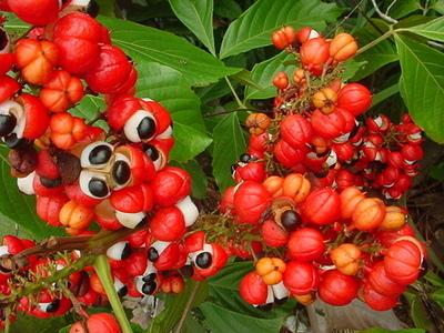 热带美洲果园景区展示