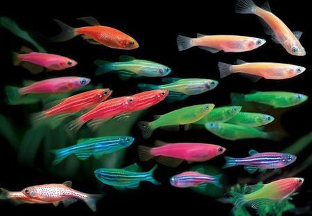 热带鱼示意图